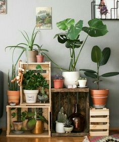 Houseplants with wooden crates.