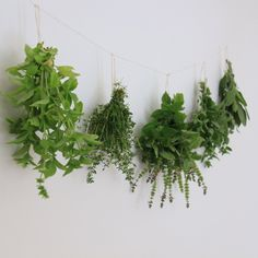 I can't wait to grow my own witch herbs! Having a witch garden would be amazing..so perfect for a hedge witch. I love these witches herb garden ideas! #witchherbs #herbs #herbal #hedgewitch