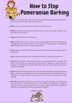 Learn how to stop Pomeranian barking. 10 Vital Tips How to Stop Pomeranian Barking Tips and Tricks. Do pomeranians bark a lot? Pomeranian Haircut, Pomeranian Facts, Teacup Pomeranian, Teacup Puppies, Pomeranian Puppy, Black Lab Puppies, Dogs And Puppies, Corgi Puppies, Doggies