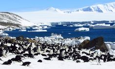 This season around 37,000 tourists are expected to visit Antarctica - home to about 20 million pairs of breeding penguins. But is it ethically acceptable to go on holiday to such a pristine environment?