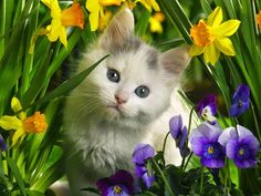 Pretty kitten in the flowers