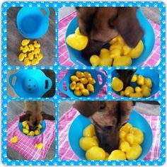 dog training,dog hacks,smart dog,teach your dog,dog learning Smart Dog Toys, Diy Dog Toys, Brain Games For Dogs, Dog Games, Dog Boredom, Stimulating Dog Toys, Dog Enrichment, Dog Puzzles, Easiest Dogs To Train