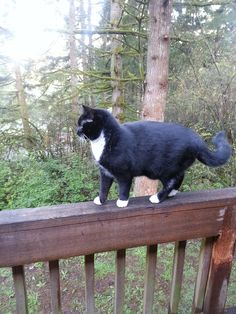 The amazing Miss Maggie on a damp spring morning, 2015. Enjoying the view from the back deck.