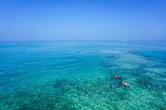 There's so much to 'sea' in #fiji find out more: http://www.fijitravel.deals/activities/