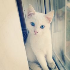 SO BLUE. HOW ARE THEY SO BLUE. | 21 Stunning Cats Who Have Prettier Eyes Than…