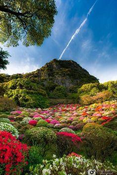 Mifuneyama Rakuen in Saga, Japan :Photo by Ryuji Kawano. Beautiful World, Beautiful Gardens, Beautiful Places, Beautiful Flowers, Belle Image Nature, Foto Nature, Nature Pictures, Amazing Nature, Pretty Pictures
