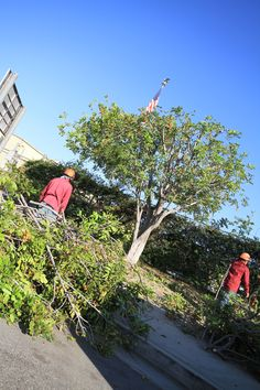 Tree Removal in Los Angeles  http://www.yourwaytreeserviceinc.com/schedule-appointment/