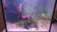 Un bout d'Amazonie Aquariums, Creations, Freshwater Aquarium, Tanked Aquariums, Fish Tanks
