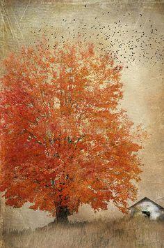 Autumn's Burn - Cheryl Tarrant