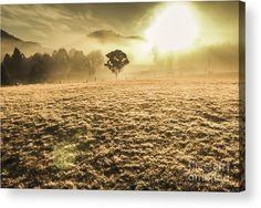Judbury Acrylic Print featuring the photograph Enigmatic Grassland by Jorgo Photography - Wall Art Gallery