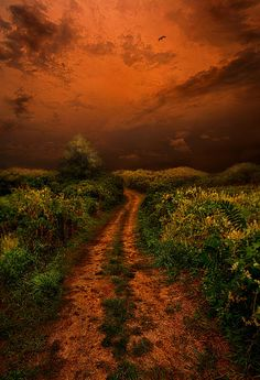 That We May Know Our Way by Phil Koch