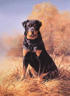 Linda Picken Art Studio / Rottweiler.jpg