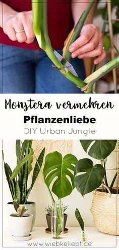 Aloe Vera Plant Indoor, Indoor Plants, Container Gardening, Gardening Tips, Garden Plants, House Plants, Growing Aloe Vera, Plant Projects, Plants Are Friends