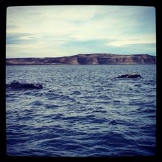 Ballenas en Puerto Pirámide @ Patagonia