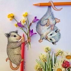 78 Best Possum Art of the Opossum images   Opossum, Art ...