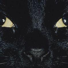 Cats Choke Babies, 10 Old Wives' Tales People Still Believe Kitten Eye Infection, Eye Infections, Old Wives Tale, Wives Tales, Cat Eye Problems, Kitten Eyes, Newborn Kittens, Old Wife, Diy Stuffed Animals