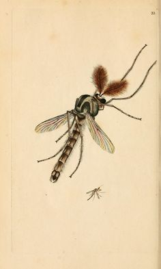 The natural history of British insects. v.1. London :Printed for the author, and for F. and C. Rivington,1792-1813.