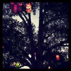 Lanterns in a fig.