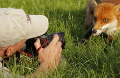 Nature Photographer - Best Job in the World. Some animals don't run. In fact, some of them are really curious and come closer to check out the photographer.
