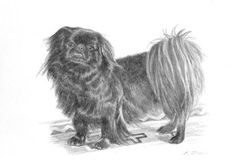 Black Pekingese Dog Print in 8x10 Mat from Original by PTarlowArt, $17.00