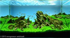 AGA Aquascaping Contest 2013 - Aquatic Garden, Smaller than 28L Category Winners | Aquascaping Love