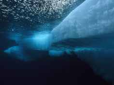 arctic ocean pictures | Underwater Landscape Photos, Underwater Wallpapers, Download, Photos ...