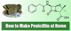 How to Make Penicillin at Home