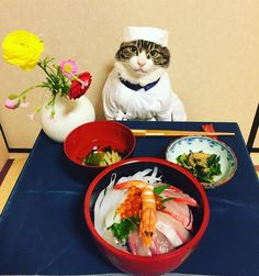 Place your order quickly hoomans or I'll give you wasabi sushi! Cute Cats, Funny Cats, Funny Animals, Cute Animals, Funny Animal Photos, Funny Animal Pictures, Crazy Cat Lady, Crazy Cats, Cat Dressed Up