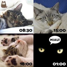 Gatos... #Infografía #Infographic #Gatos #Kitten #Cats #CatsLovers #ExpertoAnimal #MundoAnimal #ReinoAnimal #Animales #Naturaleza #Gatos #Felinos #Gatitos #Mascotas
