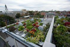Petit jardin sur le toit d'une entreprise qui a fait confiance à Vert Toit afin d'aménager son rooftop