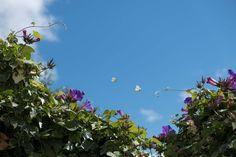 #photography #fujixt2 #butterfly #heaven #flowers