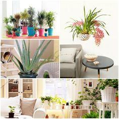 zimmerpflanze wohnideen dekotipps zimmerpflanzen
