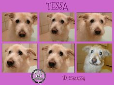 URGENT!!!! DUE OUT 8/15/14 TESSA:  12 YEARS OLD https://www.facebook.com/PAAStx/photos/a.425018764201524.87114.234124973290905/715934631776601/?type=1