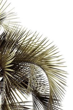 Ideas For Palm Tree Wallpaper Iphone Inspiration
