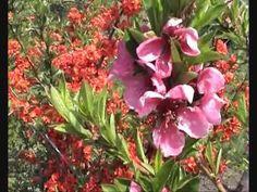 Marosfalvi Imre Enrico: Tündérszív Plants, Plant, Planets