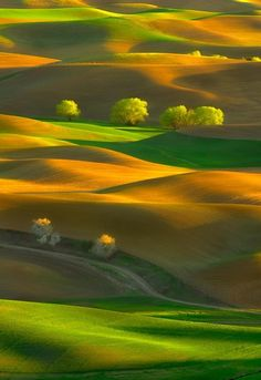 Awakening by Michael Brandt (Palouse Washington). Here you relax with these backyard landscaping ideas and landscape design. Landscape Photos, Landscape Photography, Nature Photography, Landscape Design, Beautiful World, Beautiful Places, Beautiful Pictures, Beautiful Scenery, Palouse Washington