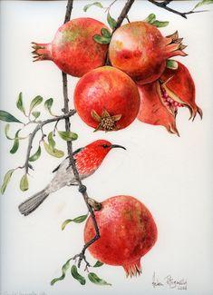 Scarlet honey eater in pomegranate 968 | Helen Fitzgerald - Botanical & Wildlife artist | Helen Fitzgerald