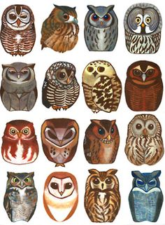 lots of different owls
