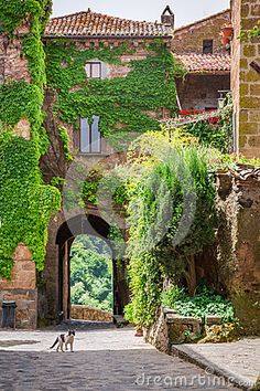 Small Cat In Ancient City Overgrown With Ivy - Download From Over 53 Million High Quality Stock Photos, Images, Vectors. Sign up for FREE today. Image: 42660768