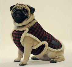 M Cómo hacer ropa para perros