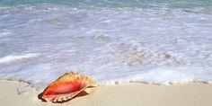 Australia & New Zealand. New Zealand Cruises, Crafts, Bethlehem, February, Child, Australia, Key, Sea Shells, G Minor
