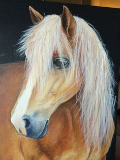 I painted this painting of my sister's Haflinger Honey as a Christmas present !