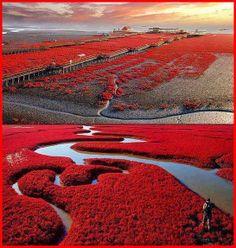 Amazing Snaps: Red Beach – Panjin, China