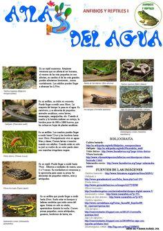 Anfibios y reptiles Irene Gil y Diana Suárez, 2º A