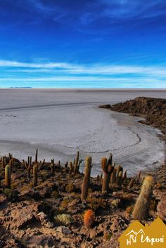 #SalarDeUyuni #JardinesDeuyuni #Bolivia