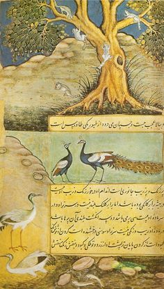 Peacocks, squirrels and cranes    An illustrated folio of Babur Namah     Mughal, Akbar period, dated A.S. 1598