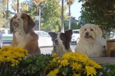 Will This New Dog Ad Win the Super Bowl? | WOOFipedia by The American Kennel Club