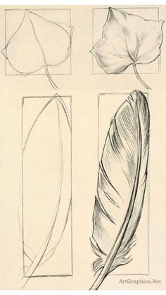 Feather sketch tutorial: I used this in a Dumbo piece and sketch of a dream catcher