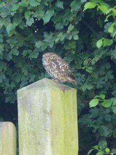 We are missing our campers but we have been kept company by a very attentive little owl whilst you are away. It sits on the entrance gates most evenings and keeps a watchful eye. Keep Company, Little Owl, Entrance Gates, Bird Feeders, Campers, Eye, Outdoor Decor, Camper Trailers, Entrance Doors