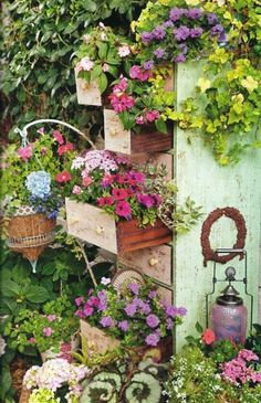 Old dresser with flower pots placed in the drawers.